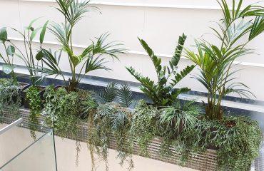 plantas decorativas para interiores