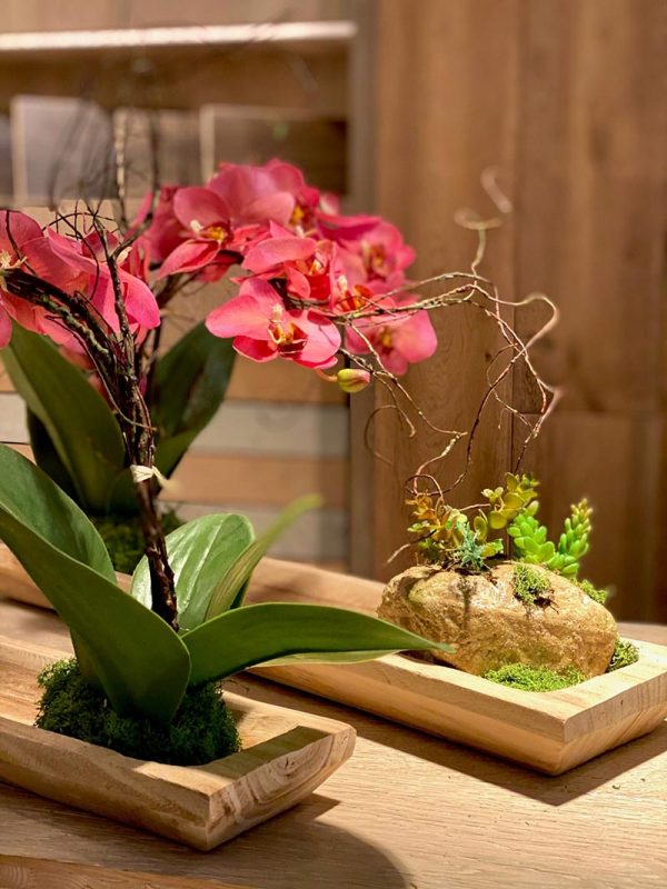 orquidea fuxia phalaenopsis