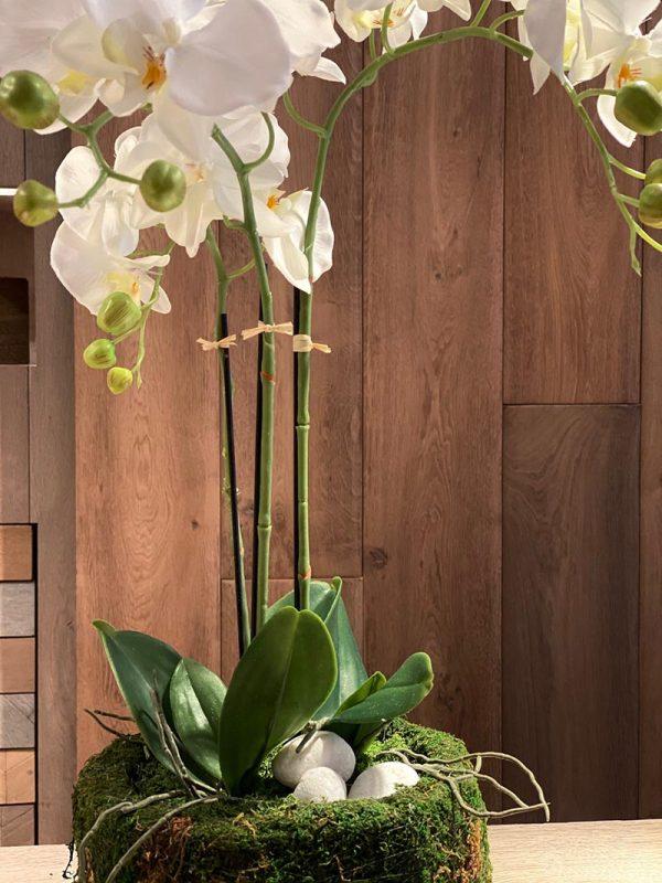 orquídea con musgo preservado